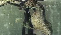 Seahorse Giving Birth Will Haunt Your Dreams