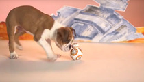 Star Wars And Dogs -- Cute Puppies Play With Droid Toy (VIDEO)