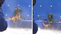 'A Dog's Purpose' Producers -- German Shepherd Is Fine, Wasn't Forced to Film