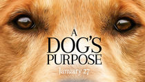'A Dog's Purpose' -- Huge Fine and Jail Possible