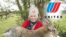 United Airlines -- Would-Be World's Biggest Rabbit Dies on Flight